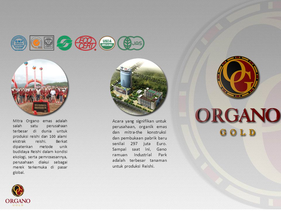 Mitra Organo emas adalah salah satu perusahaan terbesar di dunia untuk produksi reishi dan 100 alami ekstrak reishi. Berkat dipatenkan metode unik budidaya Reishi dalam kondisi ekologi, serta pemrosesannya, perusahaan diakui sebagai merek terkemuka di pasar global.