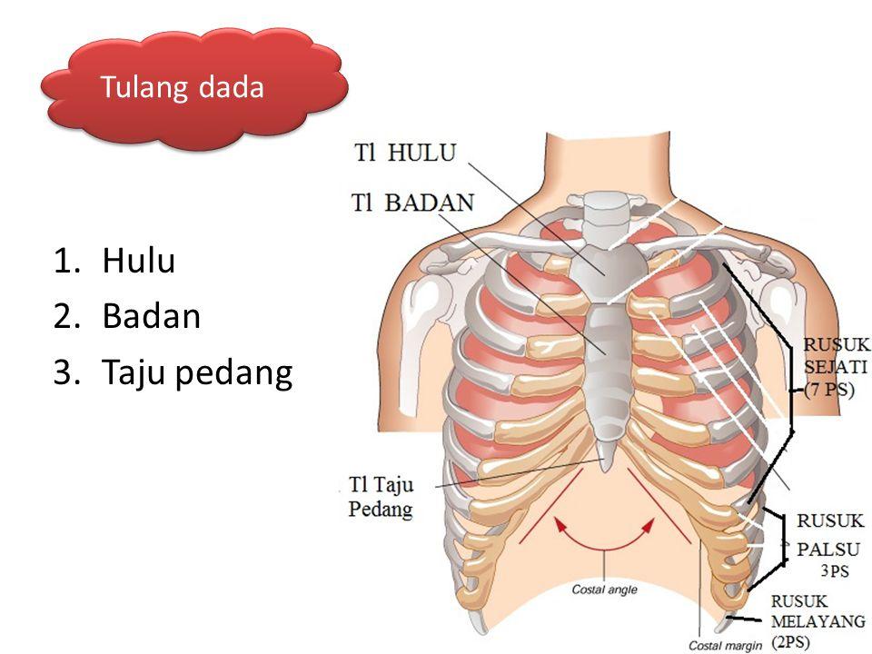 Tulang dada Hulu Badan Taju pedang