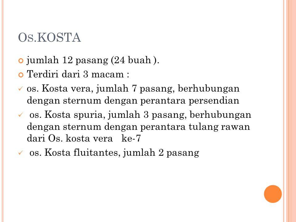 Os.KOSTA jumlah 12 pasang (24 buah ). Terdiri dari 3 macam :