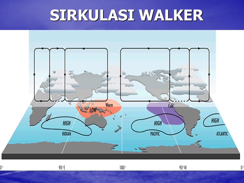 SIRKULASI WALKER
