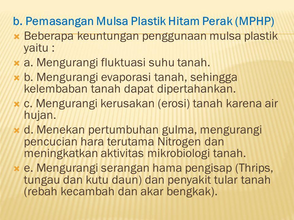 b. Pemasangan Mulsa Plastik Hitam Perak (MPHP)