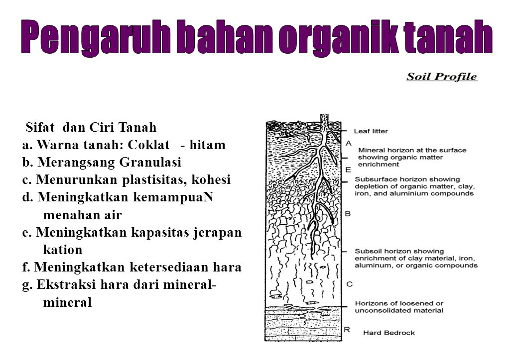 Pengaruh bahan organik tanah