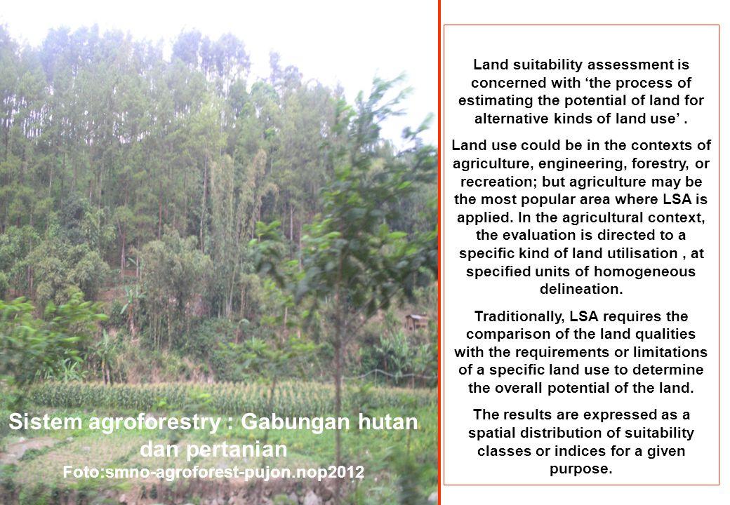 Sistem agroforestry : Gabungan hutan dan pertanian
