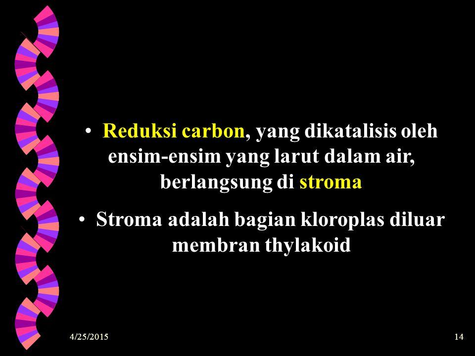 Stroma adalah bagian kloroplas diluar membran thylakoid
