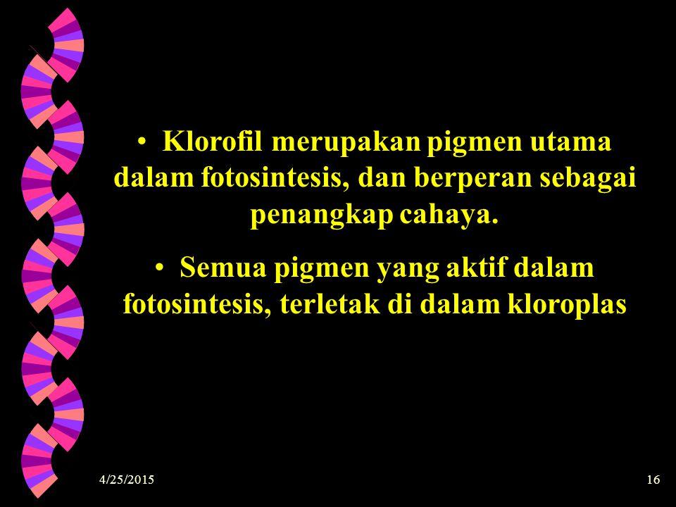 Klorofil merupakan pigmen utama dalam fotosintesis, dan berperan sebagai penangkap cahaya.