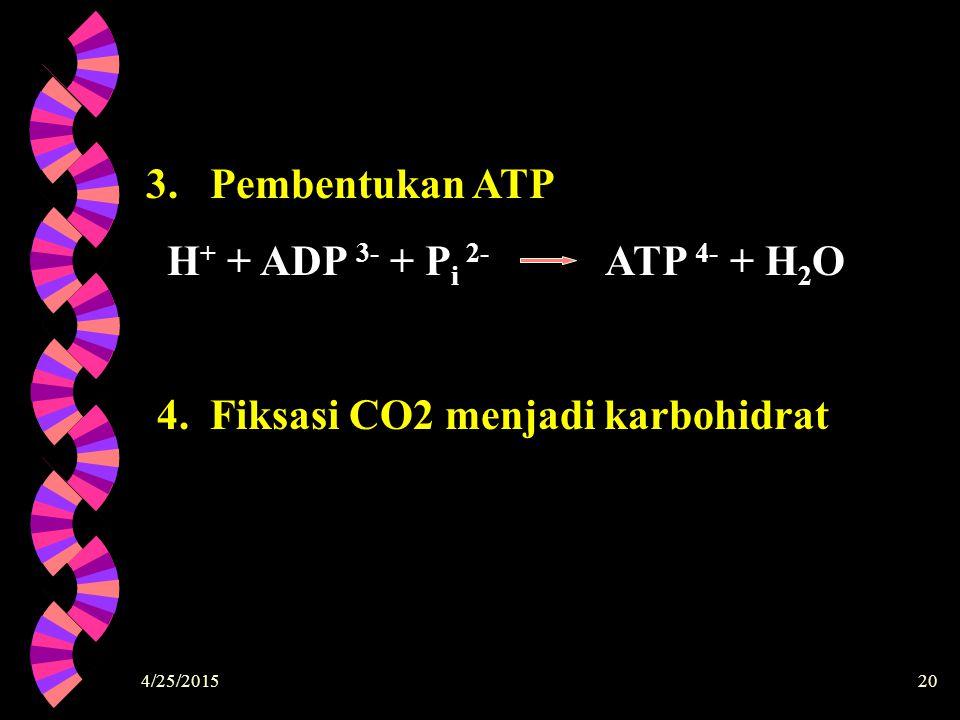 4. Fiksasi CO2 menjadi karbohidrat