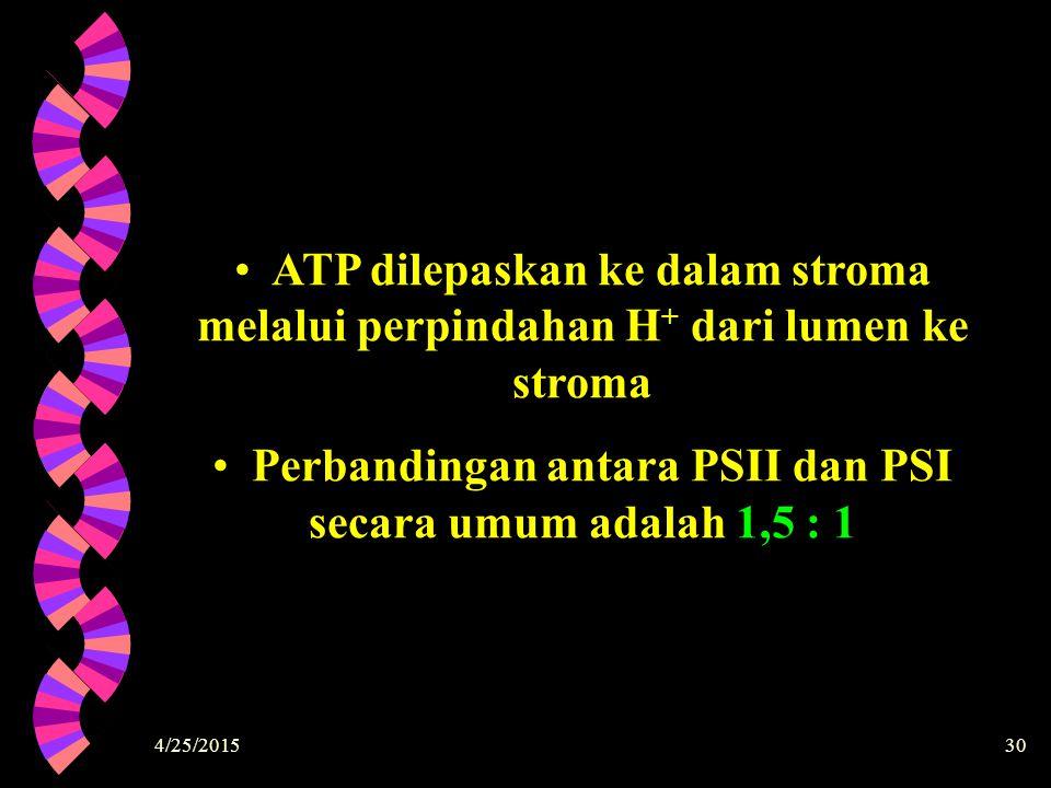 Perbandingan antara PSII dan PSI secara umum adalah 1,5 : 1