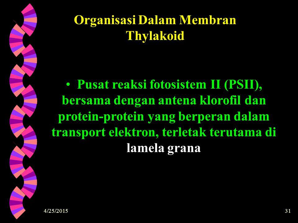 Organisasi Dalam Membran Thylakoid