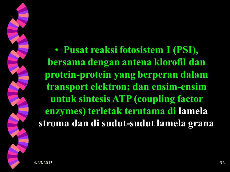 Pusat reaksi fotosistem I (PSI), bersama dengan antena klorofil dan protein-protein yang berperan dalam transport elektron; dan ensim-ensim untuk sintesis ATP (coupling factor enzymes) terletak terutama di lamela stroma dan di sudut-sudut lamela grana