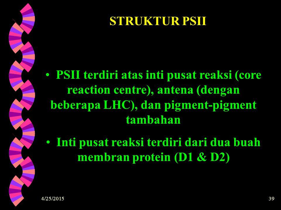 Inti pusat reaksi terdiri dari dua buah membran protein (D1 & D2)