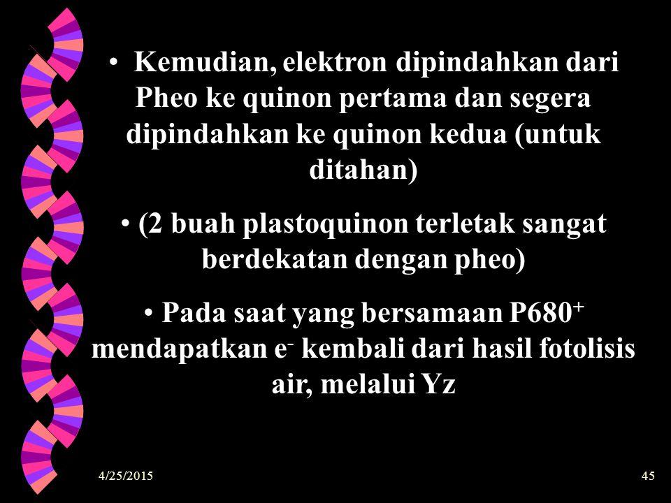 (2 buah plastoquinon terletak sangat berdekatan dengan pheo)