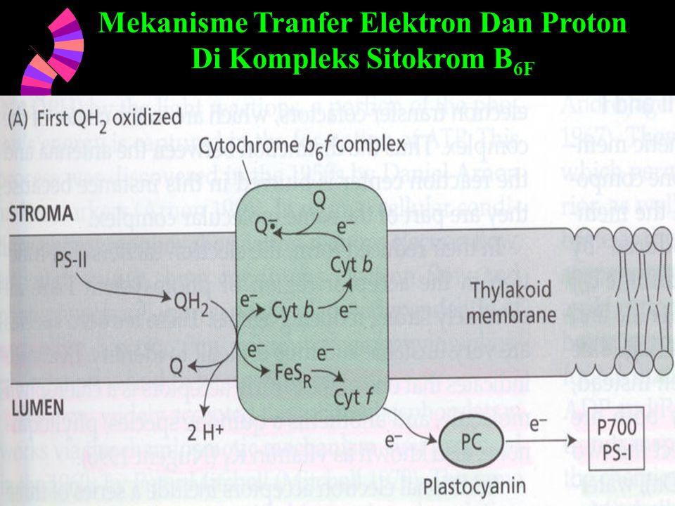 Mekanisme Tranfer Elektron Dan Proton Di Kompleks Sitokrom B6F