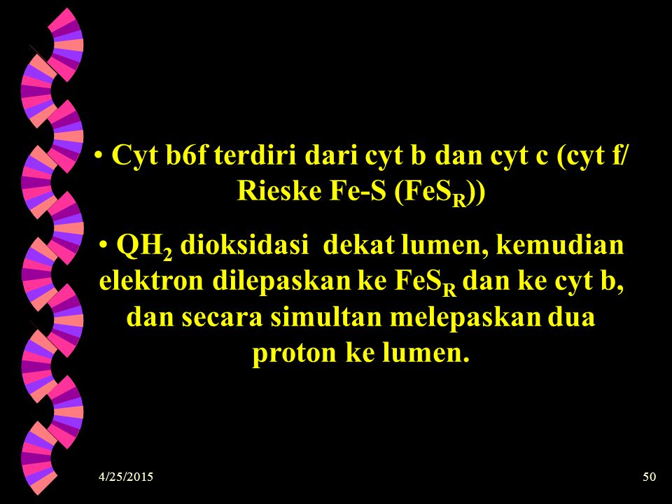 Cyt b6f terdiri dari cyt b dan cyt c (cyt f/ Rieske Fe-S (FeSR))
