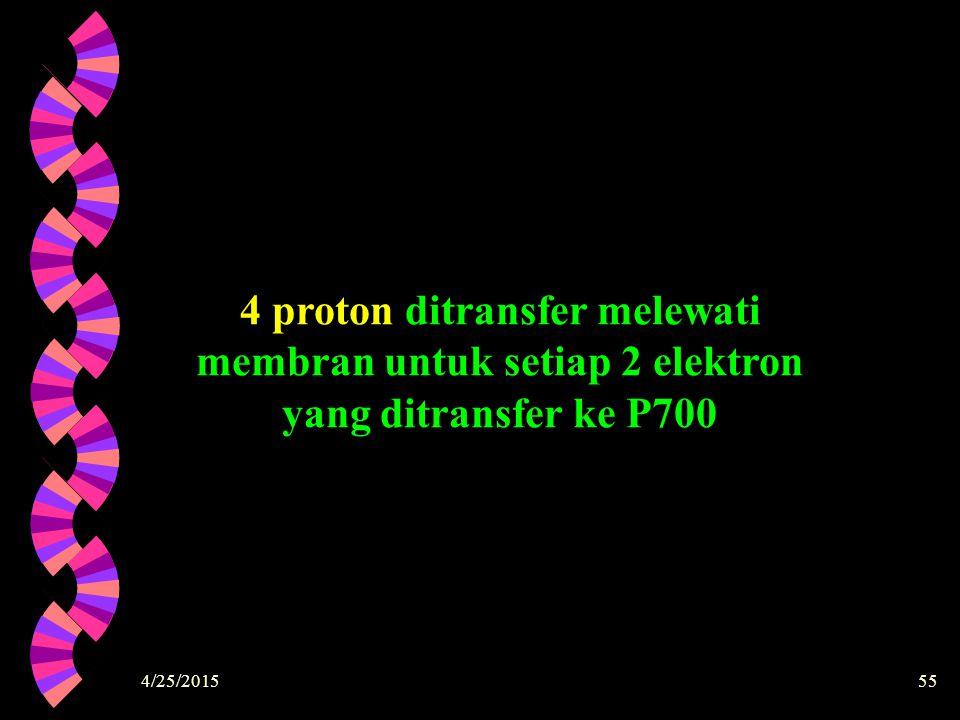 4 proton ditransfer melewati membran untuk setiap 2 elektron yang ditransfer ke P700