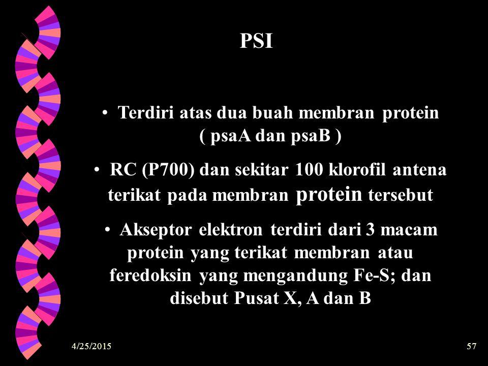 Terdiri atas dua buah membran protein ( psaA dan psaB )