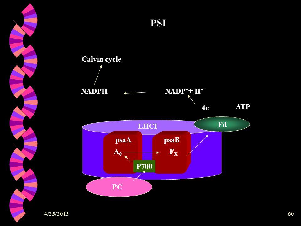 PSI LHCI psaB psaA PC P700 A0 FX Fd 4e- NADP++ H+ NADPH ATP