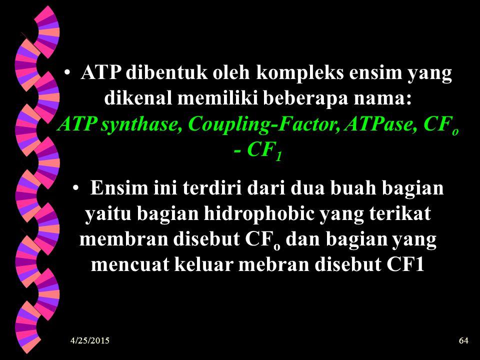 ATP dibentuk oleh kompleks ensim yang dikenal memiliki beberapa nama: ATP synthase, Coupling-Factor, ATPase, CFo - CF1
