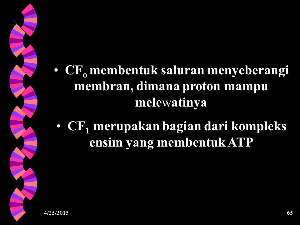 CF1 merupakan bagian dari kompleks ensim yang membentuk ATP
