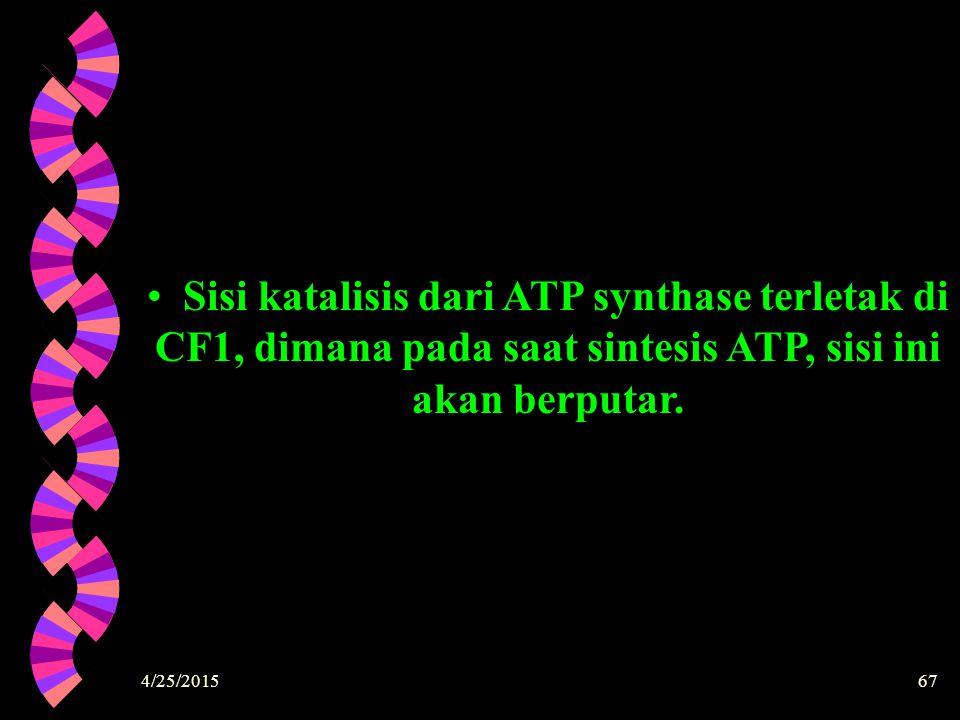 Sisi katalisis dari ATP synthase terletak di CF1, dimana pada saat sintesis ATP, sisi ini akan berputar.