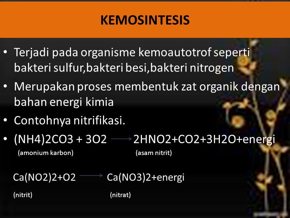 KEMOSINTESIS Terjadi pada organisme kemoautotrof seperti bakteri sulfur,bakteri besi,bakteri nitrogen.