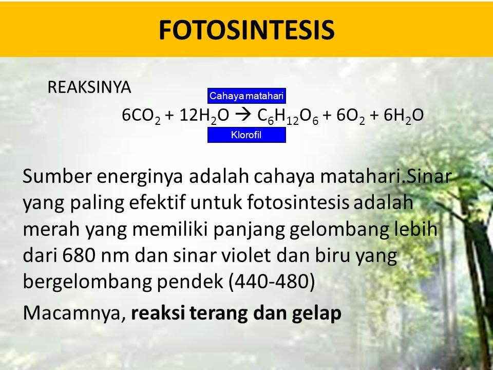 FOTOSINTESIS REAKSINYA. 6CO2 + 12H2O  C6H12O6 + 6O2 + 6H2O.