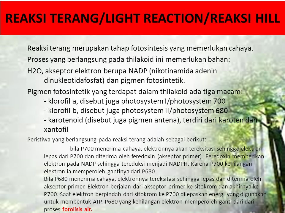 REAKSI TERANG/LIGHT REACTION/REAKSI HILL