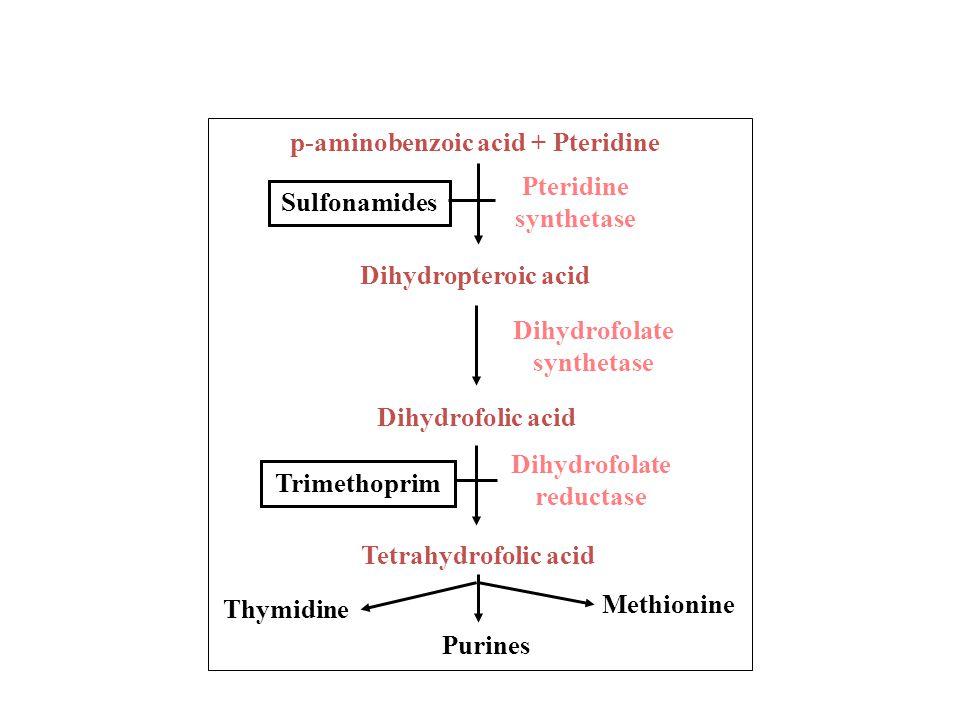 p-aminobenzoic acid + Pteridine
