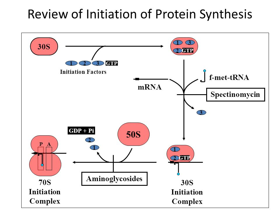Review of Initiation of Protein Synthesis