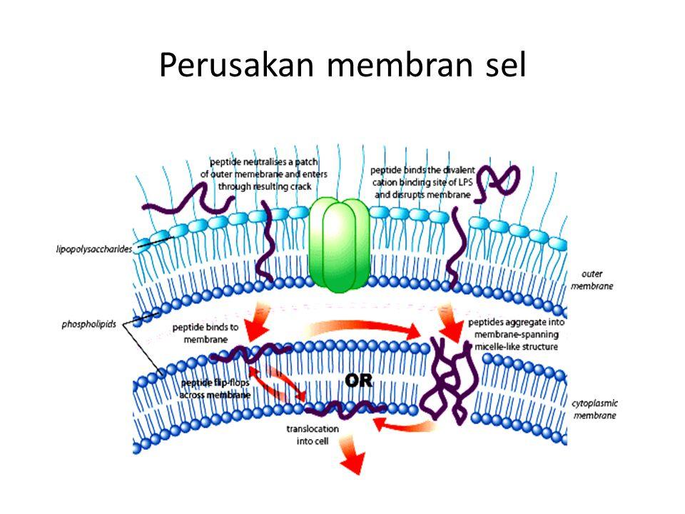 Perusakan membran sel