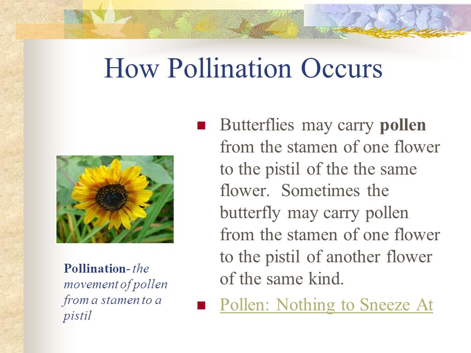 How Pollination Occurs