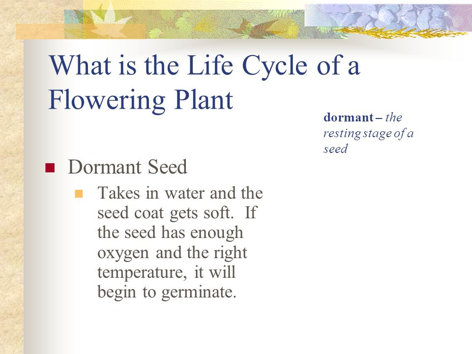 What is the Life Cycle of a Flowering Plant