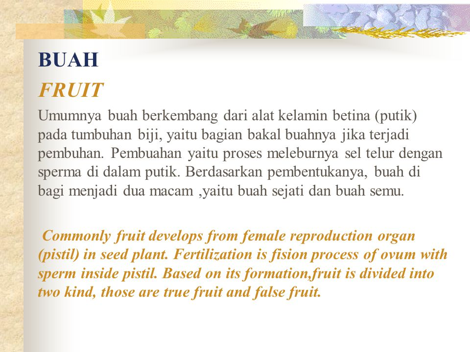 BUAH FRUIT.