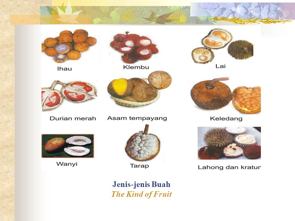 Jenis-jenis Buah The Kind of Fruit