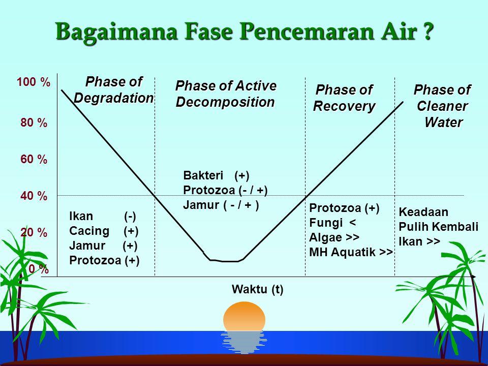 Bagaimana Fase Pencemaran Air