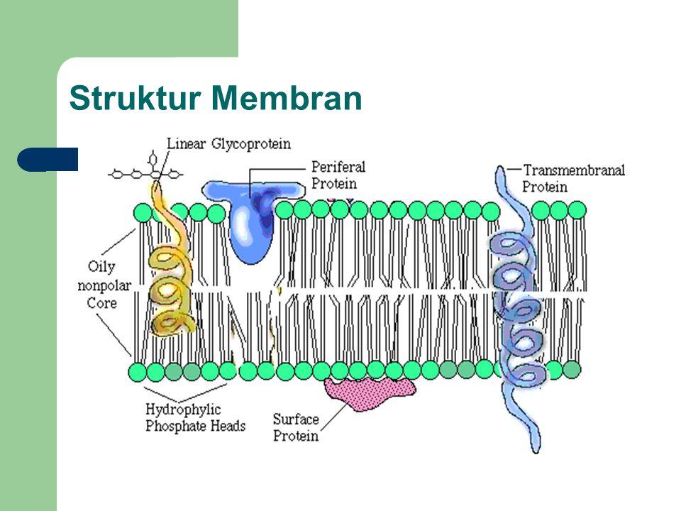 Struktur Membran