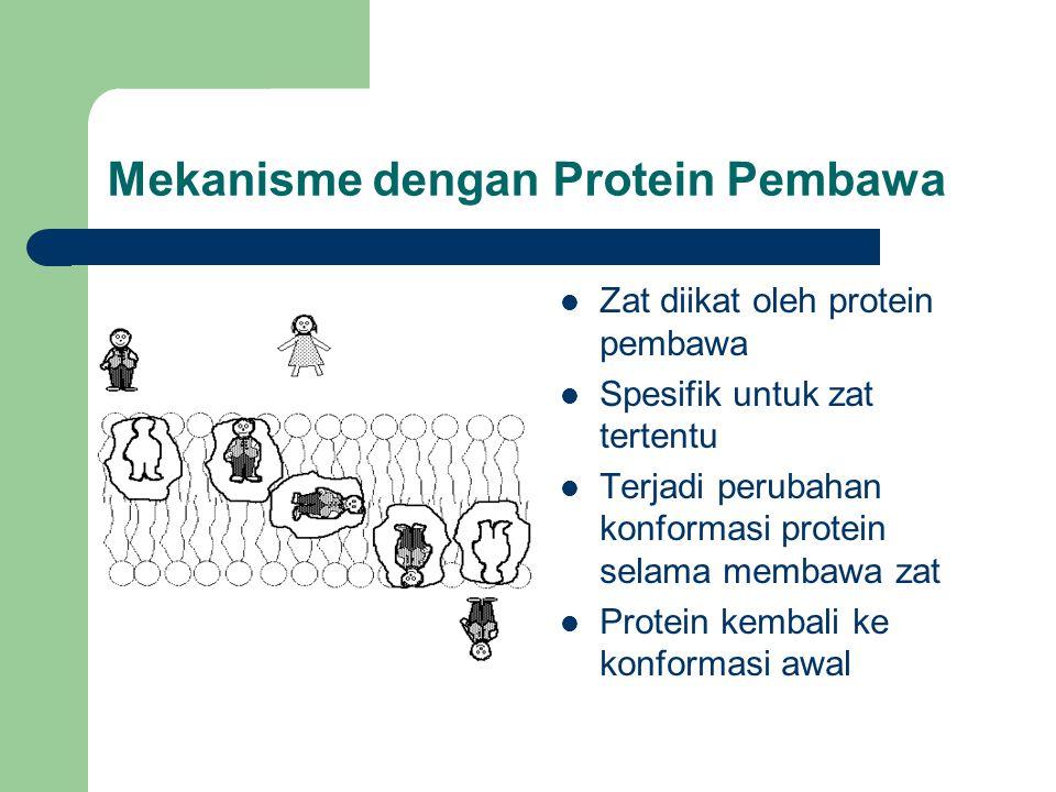 Mekanisme dengan Protein Pembawa