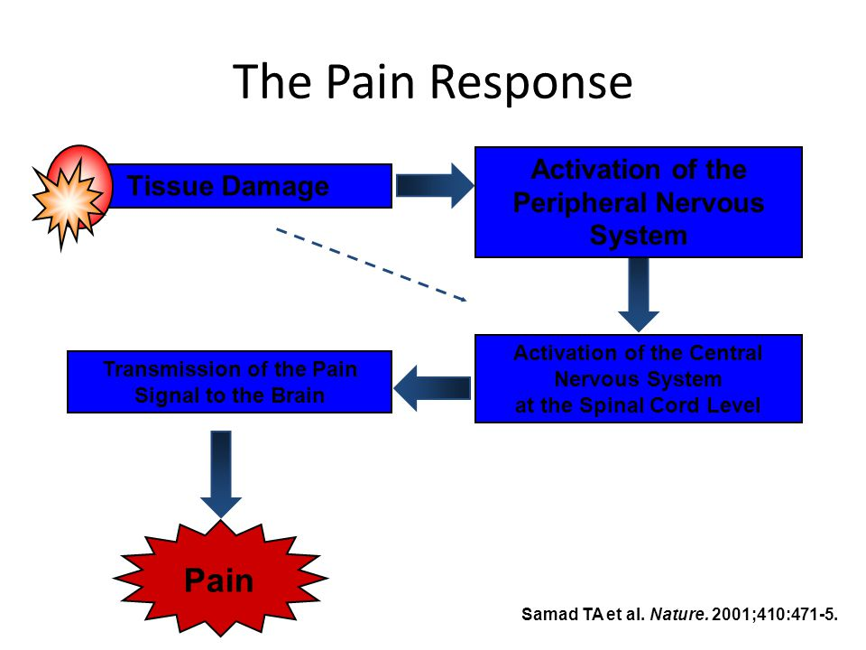 The Pain Response Pain Activation of the Peripheral Nervous System