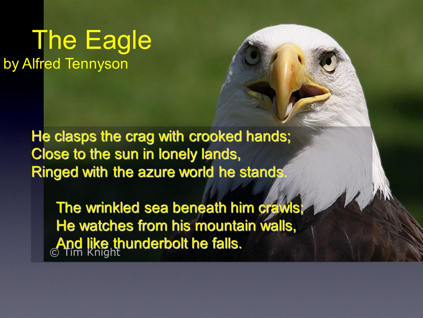 The Eagle by Alfred Tennyson He clasps the crag with crooked hands;