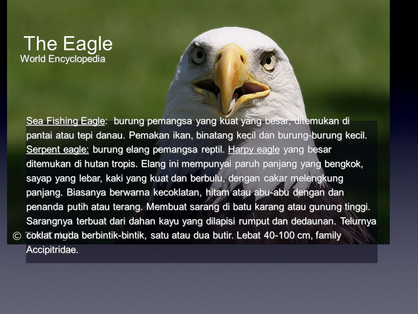 The Eagle World Encyclopedia