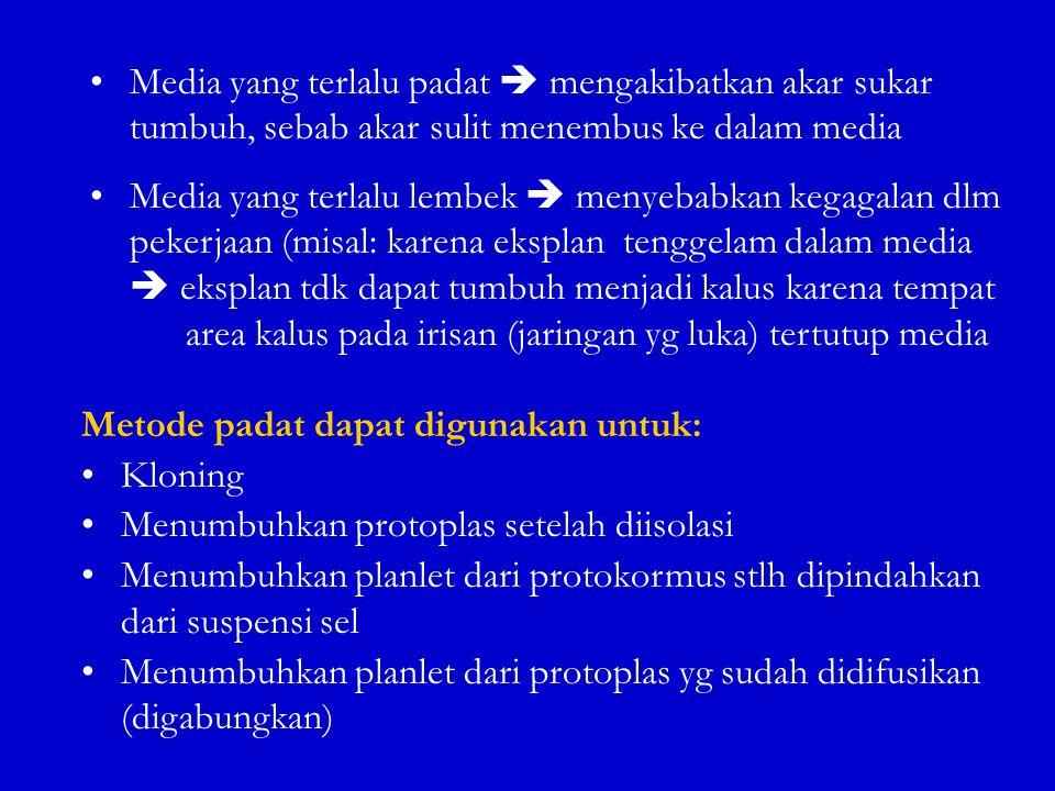Media yang terlalu padat  mengakibatkan akar sukar tumbuh, sebab akar sulit menembus ke dalam media