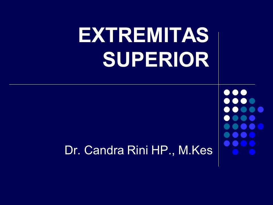 EXTREMITAS SUPERIOR Dr. Candra Rini HP., M.Kes