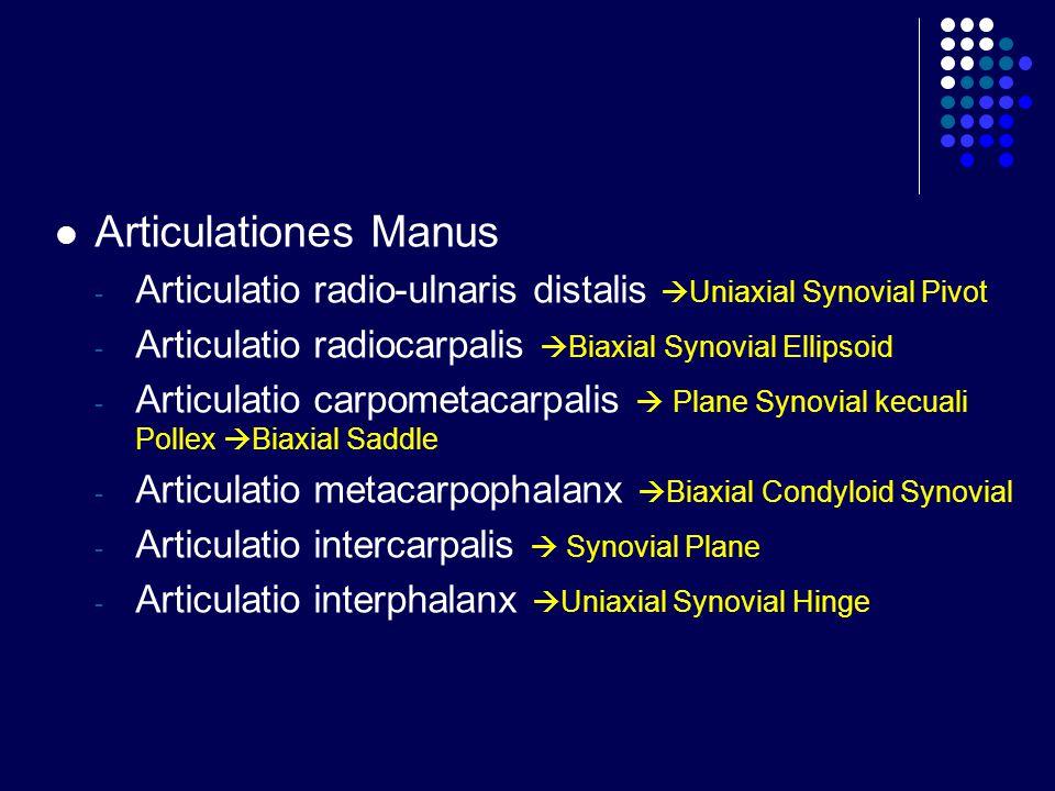 Articulationes Manus Articulatio radio-ulnaris distalis Uniaxial Synovial Pivot. Articulatio radiocarpalis Biaxial Synovial Ellipsoid.