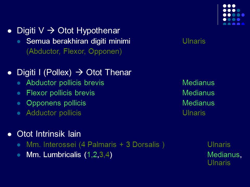 Digiti V  Otot Hypothenar