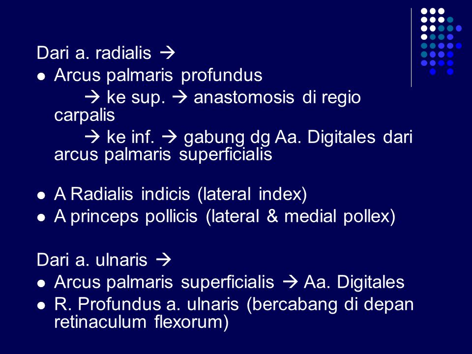 Dari a. radialis  Arcus palmaris profundus.  ke sup.  anastomosis di regio carpalis.