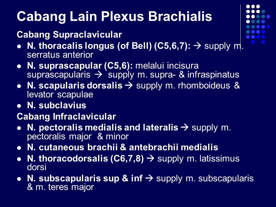 Cabang Lain Plexus Brachialis