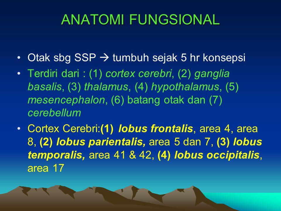 ANATOMI FUNGSIONAL Otak sbg SSP  tumbuh sejak 5 hr konsepsi