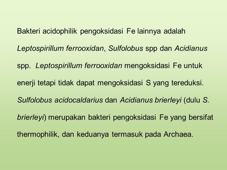 Bakteri acidophilik pengoksidasi Fe lainnya adalah Leptospirillum ferrooxidan, Sulfolobus spp dan Acidianus spp.