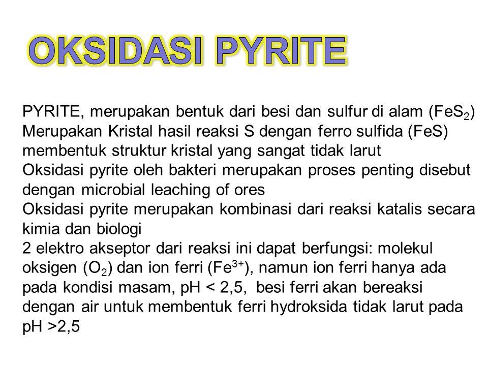 OKSIDASI PYRITE PYRITE, merupakan bentuk dari besi dan sulfur di alam (FeS2)