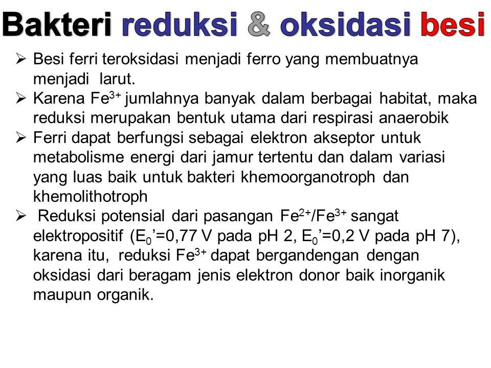 Bakteri reduksi & oksidasi besi