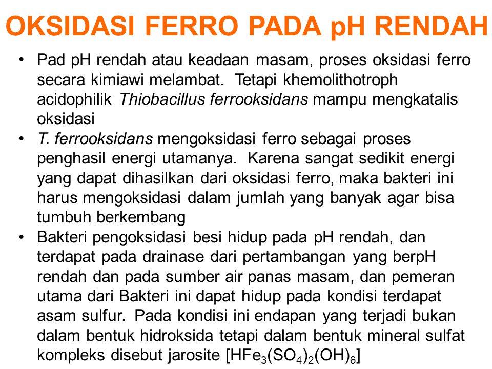 OKSIDASI FERRO PADA pH RENDAH